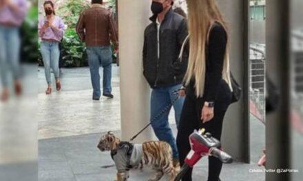 Mujer pasea con cachorro de tigre en centro comercial de Polanco; la critican en redes