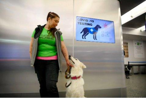 Finlandia recurre a perros para detectar el Covid19 en aeropuertos