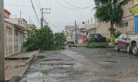 Caída de árbol en la Colonia Rafael Lucio en Xalapa