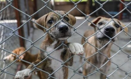 Proponen cinco años de cárcel por maltrato animal; castigarán lesiones, abandono y muerte
