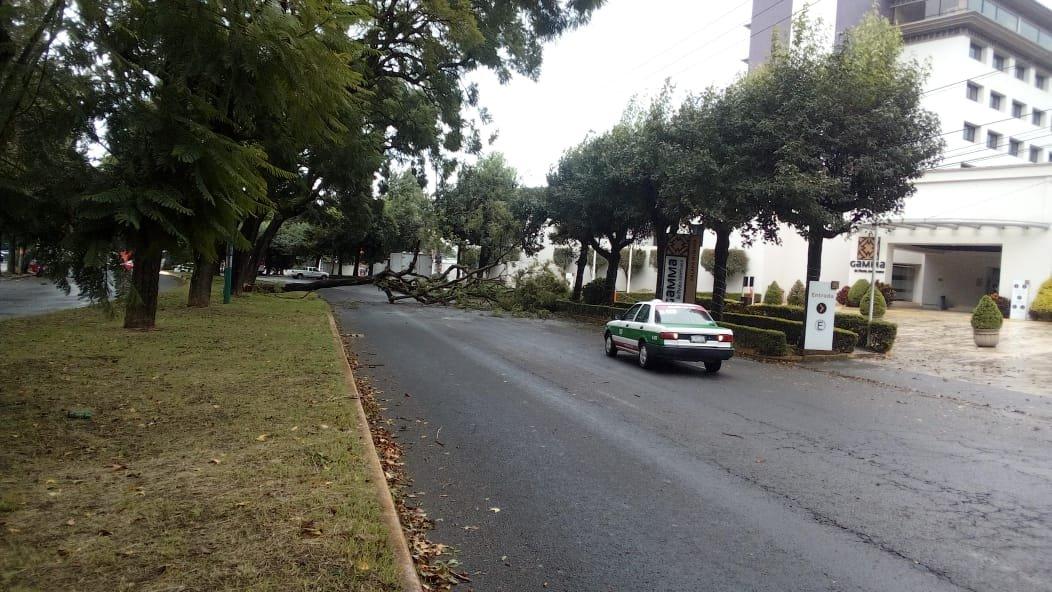 Se registra caída de árbol sobre la avenida Ruiz Cortines en Xalapa
