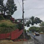 Caída de árbol sobre la Avenida Lázaro Cárdenas, a la altura de Universidad de Xalapa