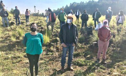 """Realizan reforestación en él Área Natural destinada para la educación ambiental """"San Juan del Monte"""", la cual dio inicio desde julio del presente año."""