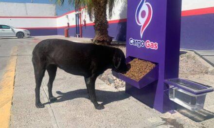 Gasolinera de Torreón se vuelve viral por alimentar a perritos de la calle