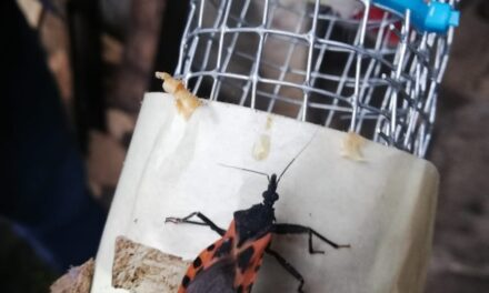 Del 4 al 10 de octubre 51 casos confirmados de la enfermedad de Chagas, en el Estado