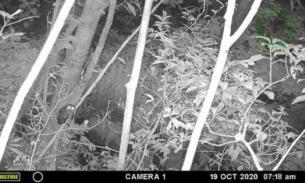 """UV monitorea fauna del ANP """"Parque Nacional Cañón del Río Blanco"""""""