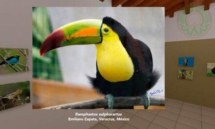 Colores que vuelan, fotografías de Rafael Ruiz en sala virtual