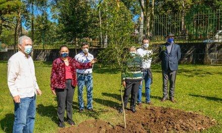 UV inició campaña de arborización