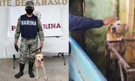Ya es Marino! Perrito rescatado de inundaciones en Tabasco, es adoptado por SEMAR
