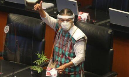 Comisiones del Senado aprueban dictamen para regular uso lúdico de mariguana