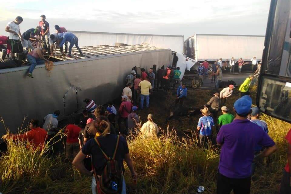 Tráiler cargado de vacas vuelca en la pista La Tinaja – Cosamaloapan; reportan actos de rapiña en el sitio