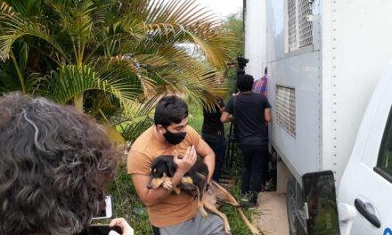 Rescatan a perros y gatos que iban a ser sacrificados en el Cemca en Mérida