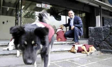 Con todo y chaleco los perros callejeros que adoptó la Secretaría de Finanzas