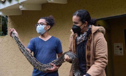UMA Xalapa, Alberga 74 especies de reptiles, tarántulas y aves rapaces