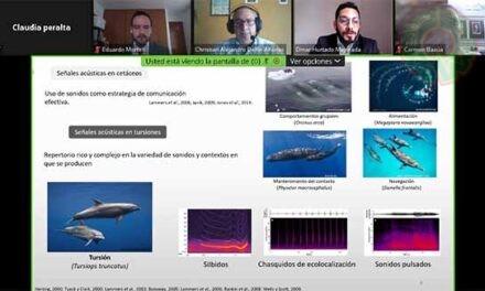Egresado de Neuroetología UV estudió actividad vocal de delfines