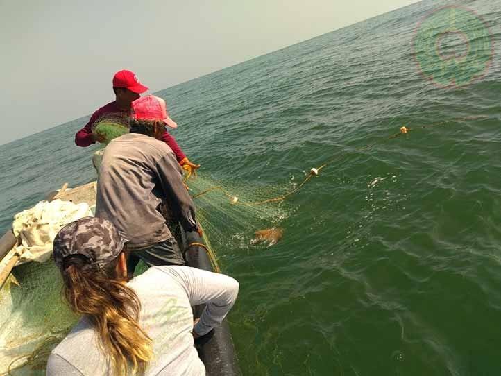 El 80 por ciento de los eventos de pesca presenta interacciones con los tursiones