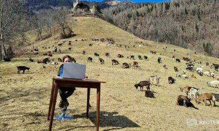Entre cabras y montañas, así toma clases niña en Italia