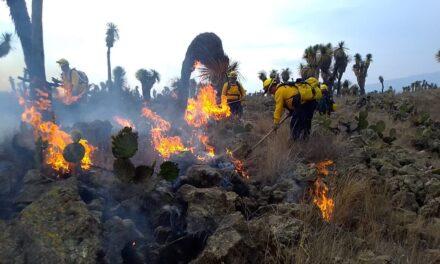 Se registra incendio en el Ejido Totalco del municipio de Perote
