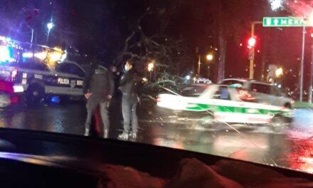 Se registra caída de árbol en la avenida Lázaro Cárdenas, esquina con avenida Xalapa