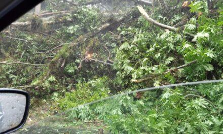 Se registra caída de árboles en la carretera Coatepec – Xico