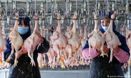 China confirma primer contagio humano de cepa de gripe aviar H10N3