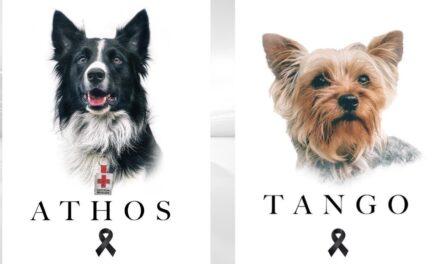 Marchan para pedir justicia por Athos y Tango, perros rescatistas envenenados