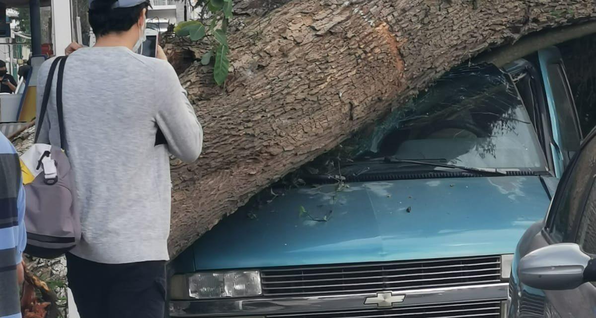 Cae árbol sobre auto en la entrada a Lucas Martín