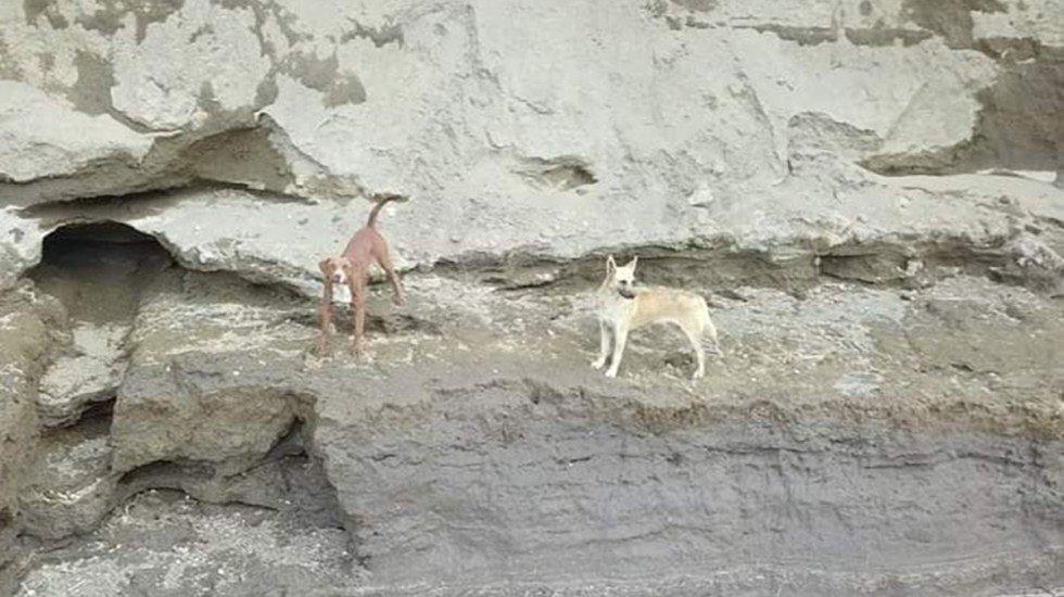 Video: Preparan rescate de dos perros que cayeron al socavón en Puebla