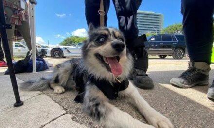 Oreo, la perra mexicana que busca a sobrevivientes en el edificio de Surfside