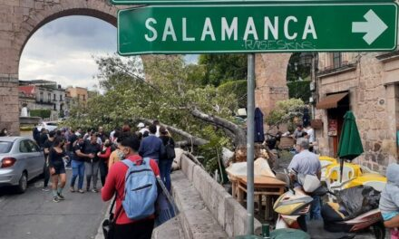 Video: Caída de árbol sobre clientes de café deja 4 heridos en Morelia