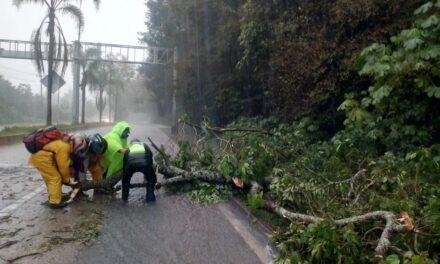Se registra caída de árbol en la carretera Xalapa – Coatepec